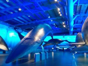 Bei Whales of Iceland kannst du originalgetreue Modelle von Walen bestaunen