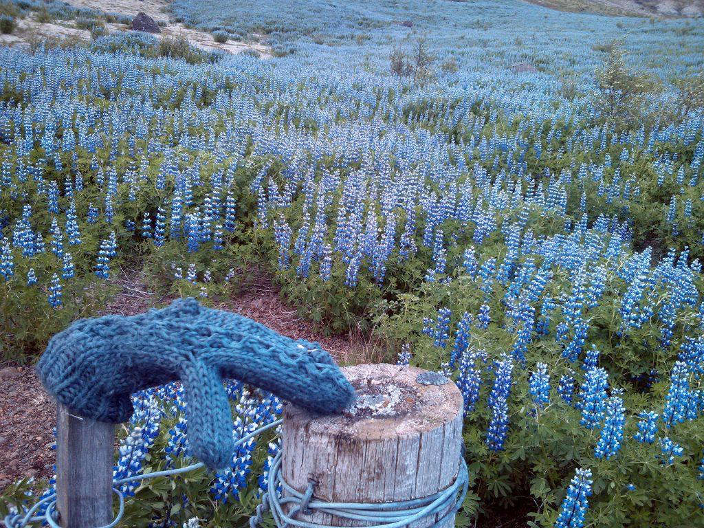 Blumen sind, zumindest im Sommer, keine Seltenheit in Island