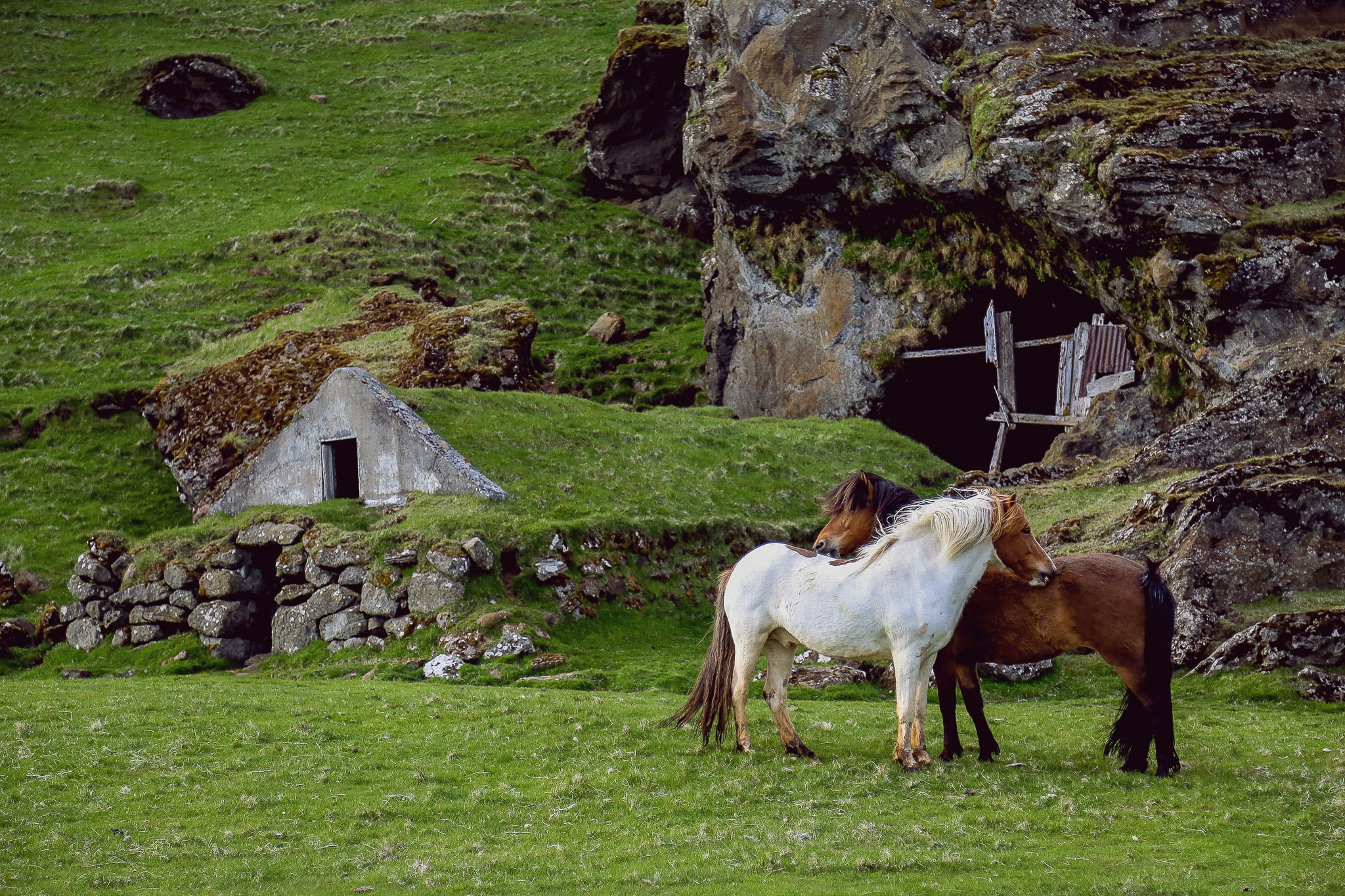 Die raue Natur Islands, besonders auf einer Farm ganz nah dran
