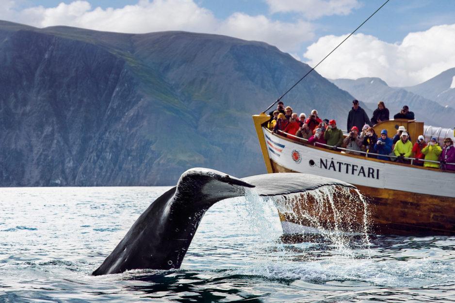 Ein guter Ort zur Walbeobachtung in Island ist Húsavík im Norden